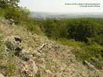 Zlaté Moravce, FK: image 13of69