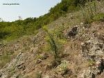 Zlaté Moravce, FK: image 16of69