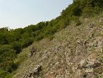 Zlaté Moravce, FK: image 17of69