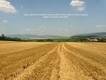 Zlaté Moravce, FK: image 23of69