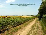 Zlaté Moravce, FK: image 31of69