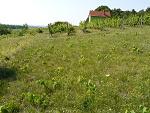 Zlaté Moravce, FK: image 53of69