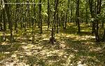 Zlaté Moravce, FK: image 58of69